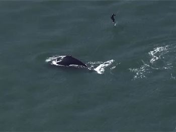 Kite Foiler Almost Collides With Whale! - Kitesurfing News