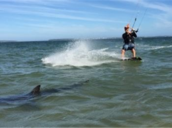Kiteboarders Ride with Friendly Shark at Dolls Point, Sydney - Kitesurfing News