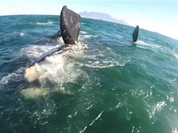 Kiteboarding with Whales in Cape Town - Kitesurfing News